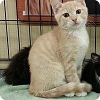 Adopt A Pet :: Quinn - Pittstown, NJ
