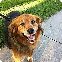 Adopt A Pet :: Annie - Council Bluffs, IA