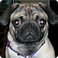 Adopt A Pet :: Jake-NJ - Mays Landing, NJ