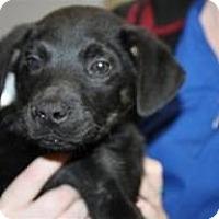 Adopt A Pet :: Adrian - Marlton, NJ