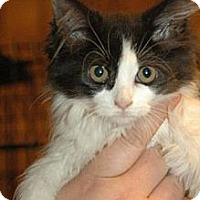 Adopt A Pet :: Julia - Grand Rapids, MI