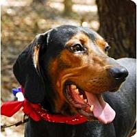 Adopt A Pet :: Riley - Dallas, TX