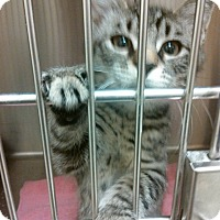 Adopt A Pet :: McCoy 6 - Plainville, MA
