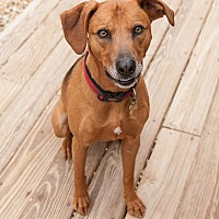 Adopt A Pet :: Homer - Richmond, VA