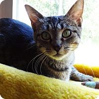 Adopt A Pet :: Mia - N. Billerica, MA