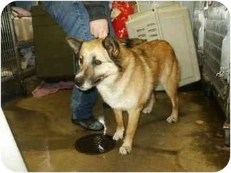 German Shepherd Dog Mix Dog for adoption in Mason City, Iowa - Lennie