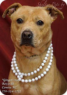 Labrador Retriever Mix Dog for adoption in Newnan City, Georgia - Ginger Snap