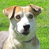Shepherd (Unknown Type) Mix Dog for adoption in Woodstock, Illinois - Fonzo