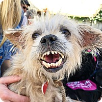 Adopt A Pet :: Whoopi Grillberg - Los Angeles, CA