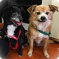 Adopt A Pet :: Beverly & Sadler - Los Angeles, CA