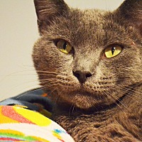 Adopt A Pet :: Morrie - Lincoln, NE