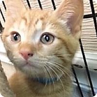 Adopt A Pet :: Linden - Medina, OH
