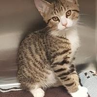 Adopt A Pet :: Nutmeg - Americus, GA