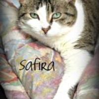 Adopt A Pet :: Safira - Crossfield, AB