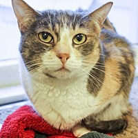 Adopt A Pet :: Whiskers - McPherson, KS
