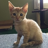 Adopt A Pet :: Florida - Naples, FL