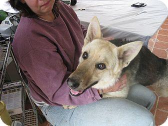 German Shepherd Dog Dog for adoption in Greeneville, Tennessee - Jancer