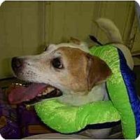 Adopt A Pet :: Riley - Omaha, NE
