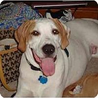 Adopt A Pet :: Rowdy - Conyers, GA