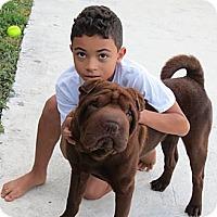 Adopt A Pet :: Louie - Gainesville, FL