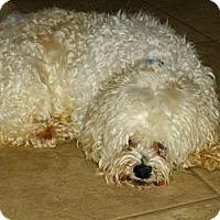 Adopt A Pet :: Denny - Sheridan, OR