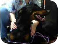 Doberman Pinscher Dog for adoption in Warren, New Jersey - Rudy