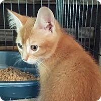 Adopt A Pet :: Ella - Lawrenceville, GA