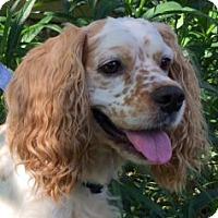 Adopt A Pet :: Cory Jacob - Sugarland, TX