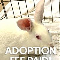 Adopt A Pet :: Jelly - Novato, CA
