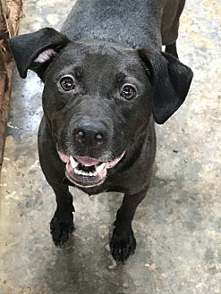 Labrador Retriever Mix Dog for adoption in Jackson, Mississippi - Rufio