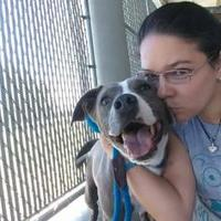 Adopt A Pet :: Helga(-)** - Owensboro, KY