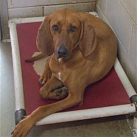 Adopt A Pet :: Rosie - Sautee, GA