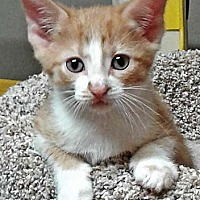 Adopt A Pet :: Iggy - N. Billerica, MA