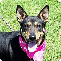 Adopt A Pet :: DIVA - Glastonbury, CT