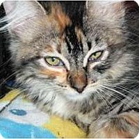 Adopt A Pet :: Maisie - Pasadena, CA