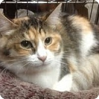 Adopt A Pet :: Shyla - Modesto, CA