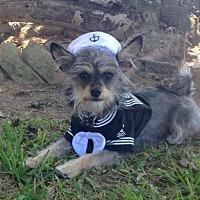 Adopt A Pet :: Desmond - Santa Fe, TX