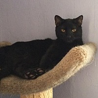 Adopt A Pet :: Eight Ball - East Stroudsburg, PA