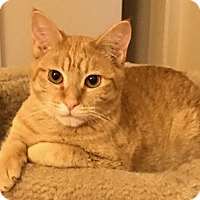 Adopt A Pet :: Monroe - North Highlands, CA