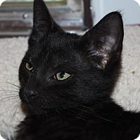 Adopt A Pet :: Bronco (LE) - Little Falls, NJ