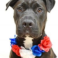 Adopt A Pet :: Lily - Dublin, CA