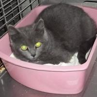 Adopt A Pet :: Dusty - Clinton, MO