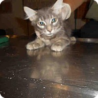 Adopt A Pet :: *KOI - Long Beach, CA