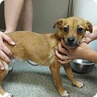 Adopt A Pet :: Louise - Humble, TX