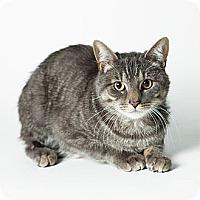 Adopt A Pet :: Ozzie - Rockaway, NJ