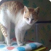 Adopt A Pet :: Jack - Tarboro, NC