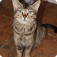 Adopt A Pet :: Pattie - Xenia, OH