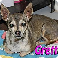 Adopt A Pet :: Gretta - Midland, TX