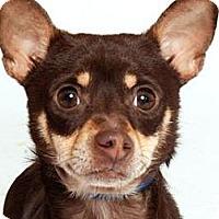 Adopt A Pet :: YaYa - Milan, NY