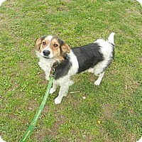 Adopt A Pet :: Scruffy - Allentown, PA